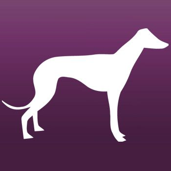 Greyhound Dog Iron on Transfer